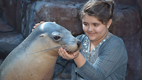 Seal feeding with Merlin's Magic Wand